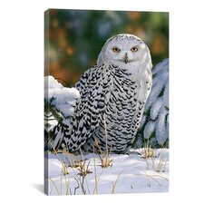 """Snowy Owl"" Canvas Wall Art by William Vanderdasson"
