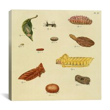 """""""Supplement Plate 15"""" Canvas Wall Art by Cramer and Stoll"""