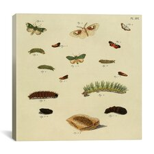 """""""Supplement Plate 16"""" Canvas Wall Art by Cramer and Stoll"""