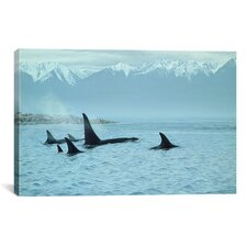 """Silent Passage - Orcas"" Canvas Wall Art by Ron Parker"