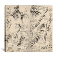 """Sketchbook Studies of Human Body Collage"" Canvas Wall Art by Leonardo da Vinci"
