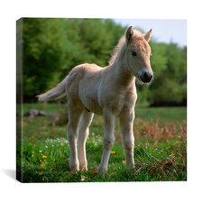 """White Pony"" Canvas Wall Art by Carl Rosen"