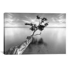 'Water Tree XIII' by Moises Levy Photographic Print on Canvas