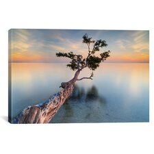 'Water Tree XIV' by Moises Levy Photographic Print on Canvas