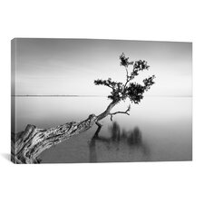 'Water Tree IX' by Moises Levy Photographic Print on Canvas
