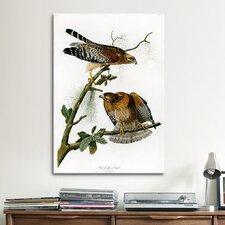 'Red-Shoulderd Hawk' by John James Audubon Painting Print on Canvas