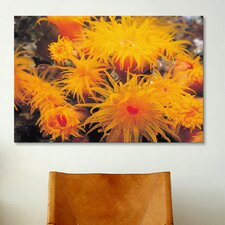 Marine and Ocean Orange Cup Coral Photographic Print on Canvas