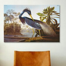 'Louisiana Heron from Birds of America' by John James Audubon Painting Print on Canvass