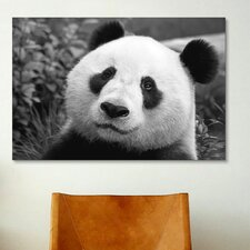 Giant Panda Photographic Print on Canvas
