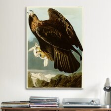 'Golden Eagle' by John James Audubon Painting Print on Canvas