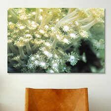 Marine and Ocean Goniopora Coral Photographic Print on Canvas
