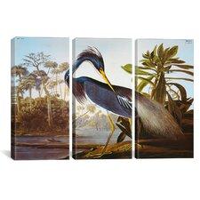 """John James Audubon Louisiana Heron From """"Birds of America"""" 3 Piece on Canvas Set"""