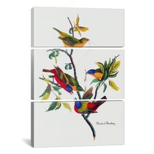 John James Audubon Painted Bunting 3 Piece on Canvas Set