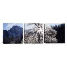 Photography Snowy Oak Tree in Yosemite National Park, California 3 Piece on Canvas Set