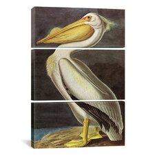 John James Audubon American White Pelican 3 Piece on Canvas Set