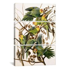 "John James Audubon Carolina Parakeet From ""Birds of America"" 3 Piece on Canvas Set"