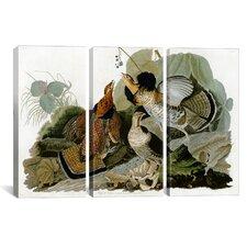 John James Audubon Ruffed Grouse 3 Piece on Canvas Set