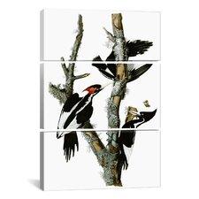 John James Audubon Ivory-billed Woodpecker1829 3 Piece on Canvas Set