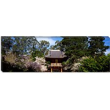 Cherry Blossom Trees in a Garden, Japanese Tea Garden, Golden Gate Park, San Francisco, California Canvas Wall Art
