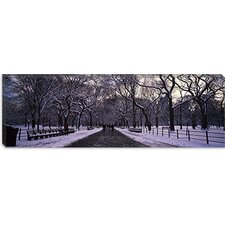 Bare Trees in a Park, New York City Canvas Wall Art
