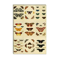"<strong>iCanvasArt</strong> ""Butterflies 9 Piece Plate Collection VI"" Canvas Wall Art by Cramer and Stoll"