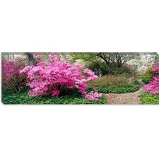 <strong>iCanvasArt</strong> Azaleas in The Garden of Eden at The Ladew Topiary Gardens, Monkton, Maryland Canvas Wall Art