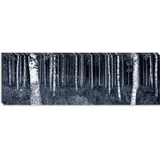 <strong>iCanvasArt</strong> Birch Trees in a Forest, Finland Canvas Wall Art