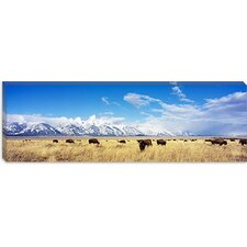 <strong>iCanvasArt</strong> Bison Herd, Grand Teton National Park, Wyoming Canvas Wall Art