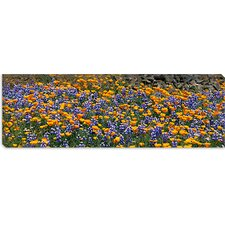 Table Mountain, California Canvas Wall Art