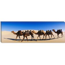 Camels Walking in the Desert Canvas Wall Art