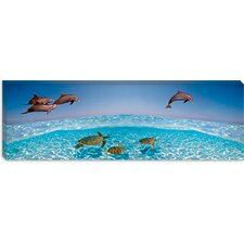 <strong>iCanvasArt</strong> Bottlenose Dolphin Jumping While Turtles Swimming Under Water Canvas Wall Art