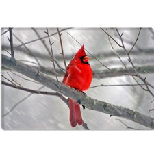 <strong>iCanvasArt</strong> Cardinal Bird Canvas Wall Art