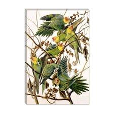 """Carolina Parakeet, From Birds of America, 1829"" Canvas Wall Art by John James Audubon"