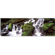 Cascading Waterfall in a Rainforest, Olympic National Park Canvas Wall Art