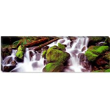 Cascading Waterfall in a Rainforest, Olympic National Park, Washington State Canvas Wall Art
