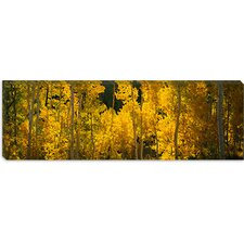 <strong>iCanvasArt</strong> Aspen Trees in a Forest, Telluride, San Miguel County, Colorado, USA Canvas Wall Art