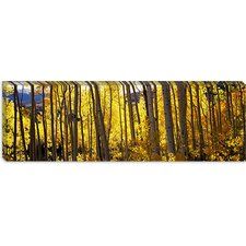 Aspen Trees in Autumn, Colorado, USA Canvas Wall Art