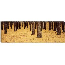<strong>iCanvasArt</strong> Low Section View of Pine and Oak Trees, Cape Cod, Massachusetts Canvas Wall Art