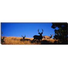 <strong>iCanvasArt</strong> Five Mule Deer in a Field, Montana Canvas Wall Art