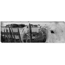 <strong>iCanvasArt</strong> Horses, Camargue, France Canvas Wall Art