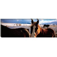 <strong>iCanvasArt</strong> Horses in a Field, Montana Canvas Wall Art
