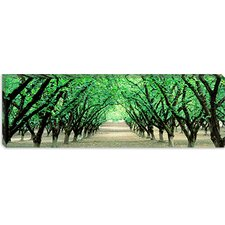 <strong>iCanvasArt</strong> Hazel Nut Orchard, Dayton, Oregon Canvas Wall Art