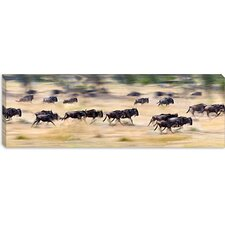 <strong>iCanvasArt</strong> Herd of Wildebeests Running in a Field, Tanzania Canvas Wall Art