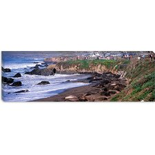 <strong>iCanvasArt</strong> Elephant Seals on the Beach, San Luis Obispo County, California Canvas Wall Art