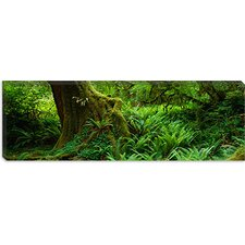 <strong>iCanvasArt</strong> Hoh Rainforest, Olympic National Forest, Washington State Canvas Wall Art
