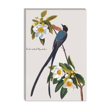 """Fork-tailed Flycatcher"" Canvas Wall Art by John James Audubon"