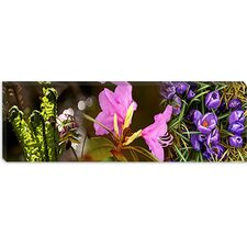 <strong>iCanvasArt</strong> Details of Early Spring and Crocus Flowers Canvas Wall Art