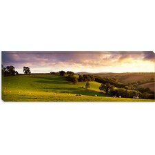 Sheep Grazing in a Field, Bickleigh, Mid Devon, Devon, England Canvas Wall Art