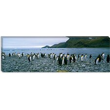 <strong>iCanvasArt</strong> Colony of King Penguins on the Beach, South Georgia Island, Antarctica Canvas Wall Art