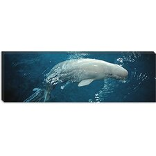<strong>iCanvasArt</strong> Close-up of a Beluga Whale in an Aquarium, Shedd Aquarium, Chicago, Illinois Canvas Wall Art